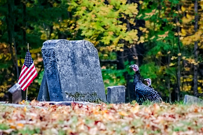 Turkeys Giving Respect