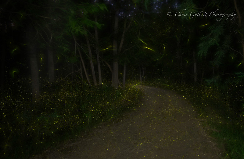 A secret Texas trail that has a spectacular display of fireflies each May.  This is about an hour worth of twinkles.