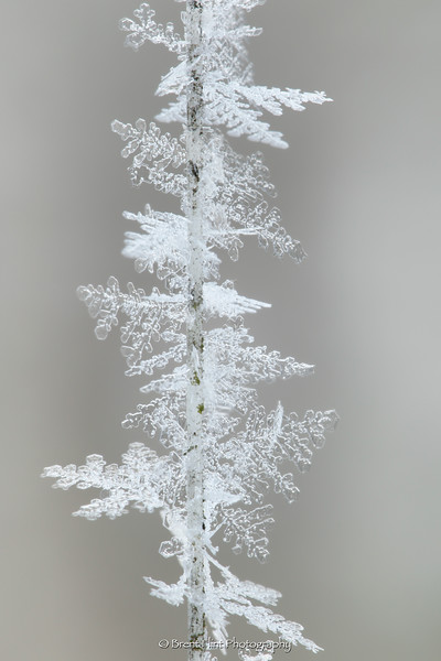 DF.4459 - ice crystals on a string for wind chimes
