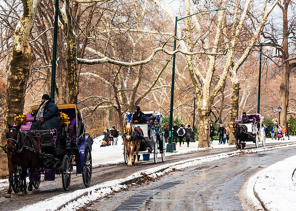 Horse-drawn carriages line up to offer a unique and wonderful way to experience the beauty of Central Park and its surroundings. - New York City, New York