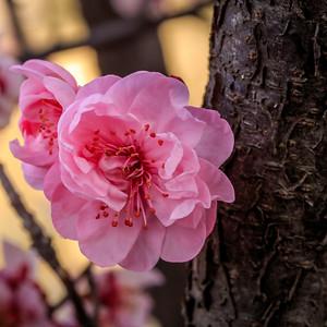 Blossom 02