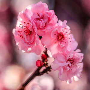 Blossom 04