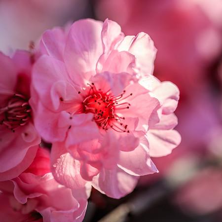 Blossom 03