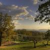Olive Grove near Fayence