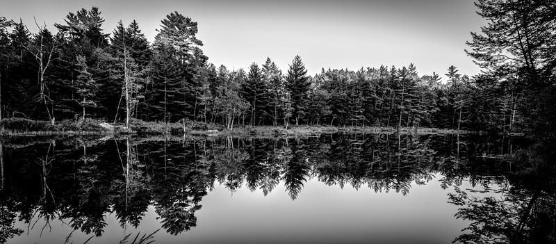 One Woods