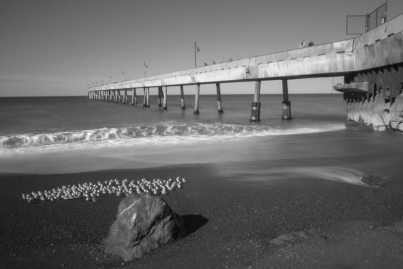 Sanderlings by the Pier