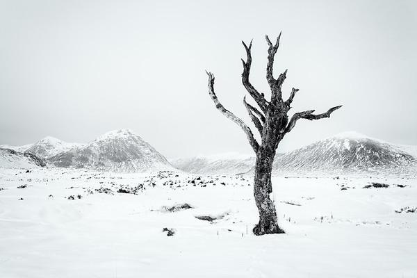 Dead tree, Glencoe, Scotland