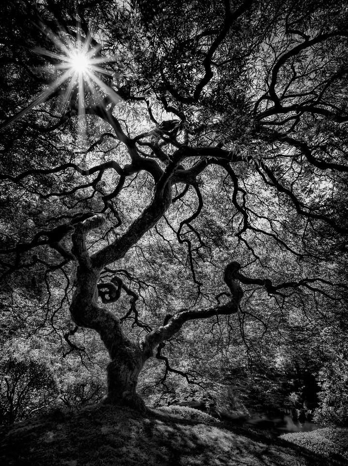 Tree Noir