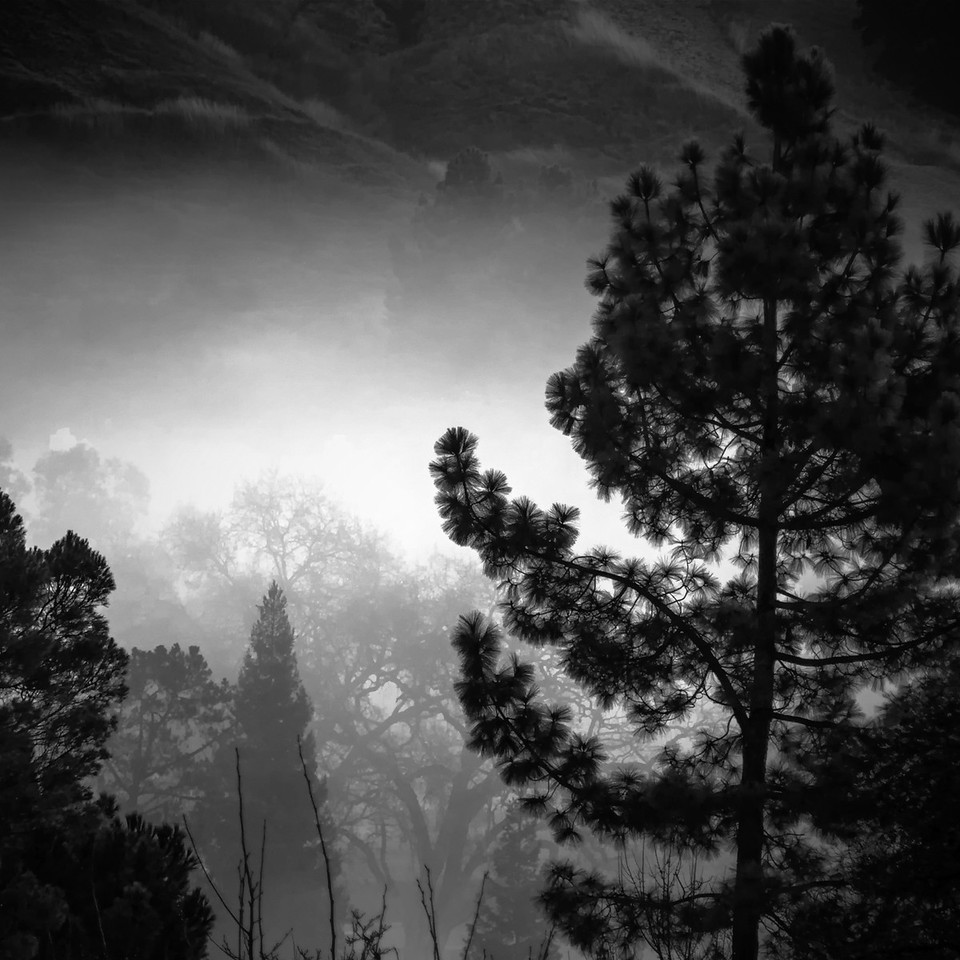 Fog in the Trees