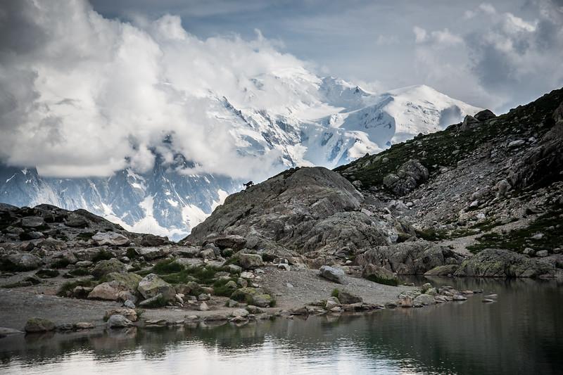 Petit chamois,  grand Mont-Blanc