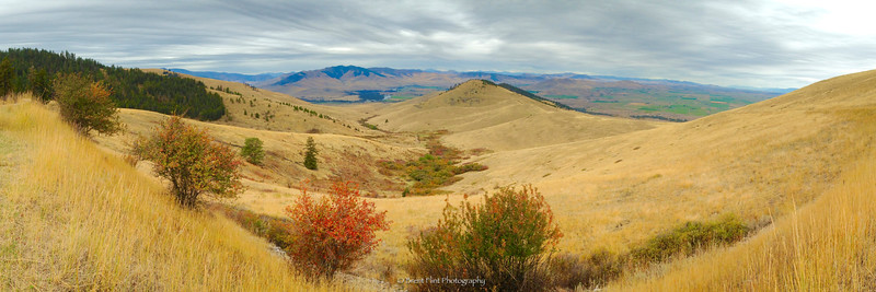 DF.4147 - sweeping hillsides in Autumn, National Bison Range, MT.