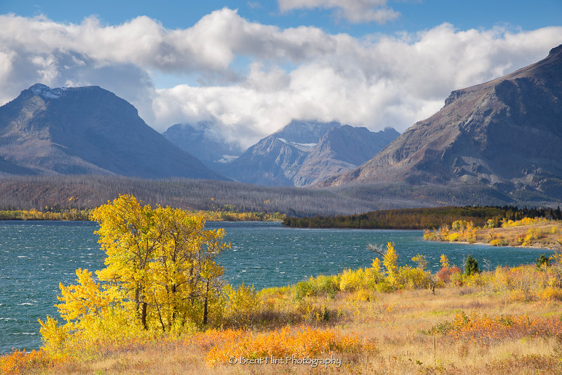 DF.4062 - aspen in fall color on Saint Mary Lake with mountains, Glacier National Park, MT.