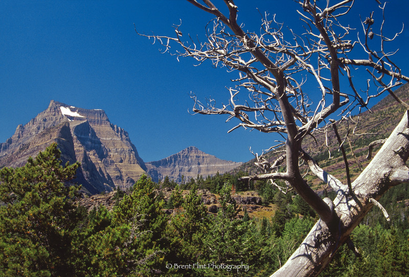 S.4258 - Going to the Sun Mtn. & Mt. Siyeh w/ snag, Glacier National Park, MT.