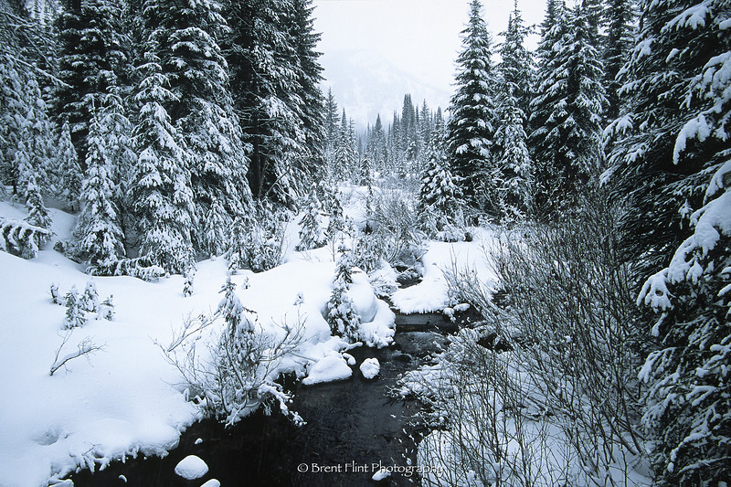 S.4910 - snow covered forest, St. Regis Lakes, Lolo National Forest, MT.