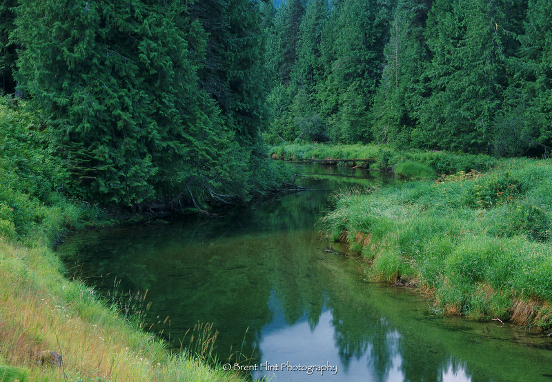 S.4229 - Bull River and trees, Kaniksu National Forest, MT.