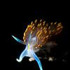 Hermissenda Opalescens, Monterey, CA - 2020