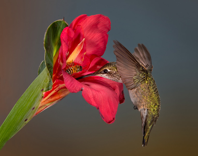 Sharing a Canna Lilly