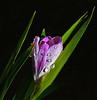 Reverie of Spring