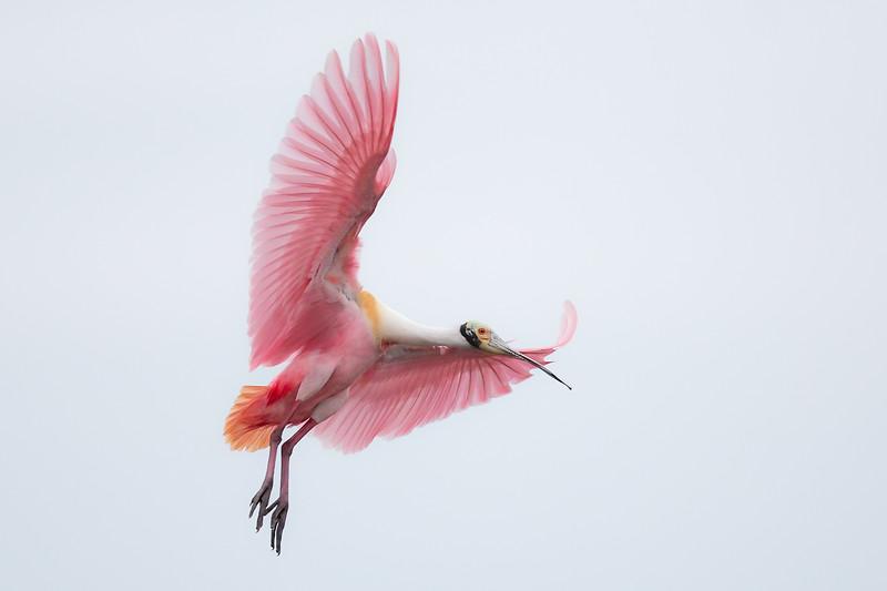 Flying Jewel