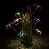 Devil's Claw Bouquet