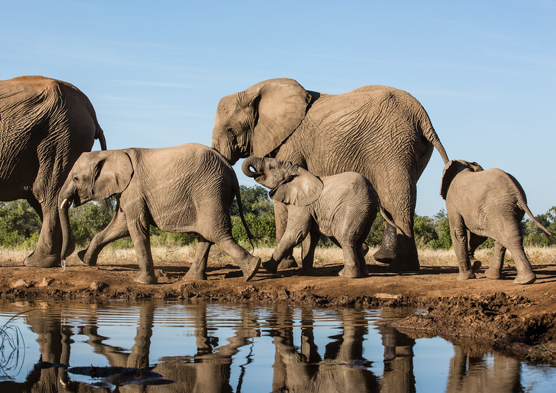 Leaving the Water Hole