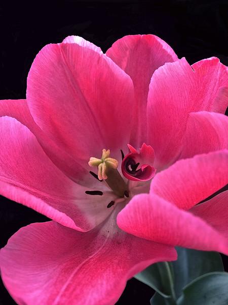 Spring's Rapture