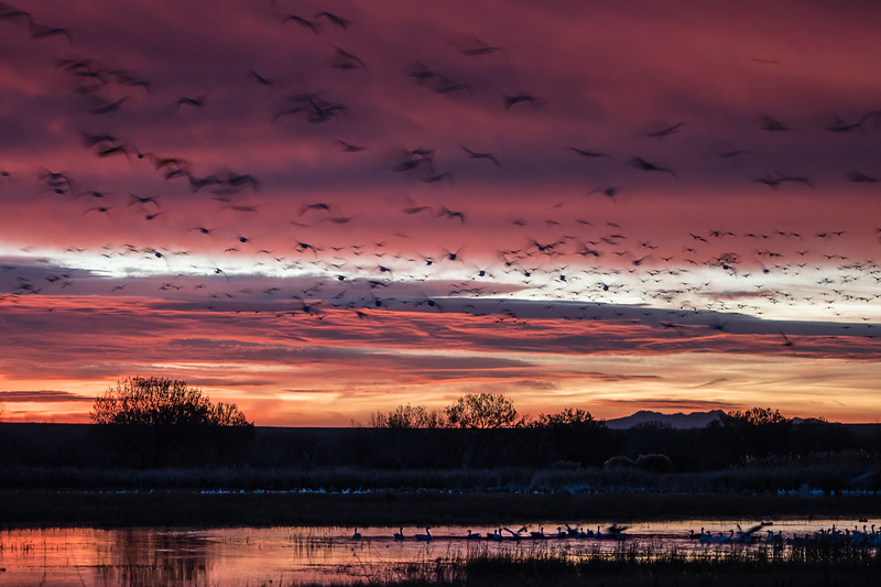 Spectral Sunrise at Bosque del Apache