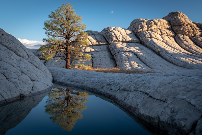 Lone Pine Reflected