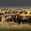 It is Gnus to Me