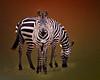 Orthogonal Zebras