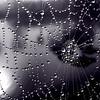 Moonlit Web