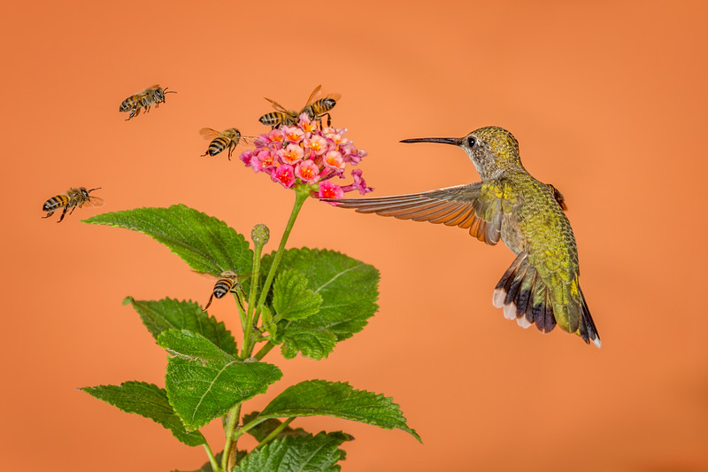 Vying for Nectar