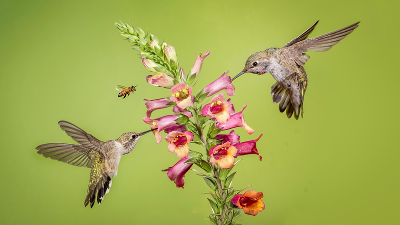 birds and the bee