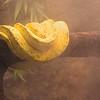 Snake in Mist