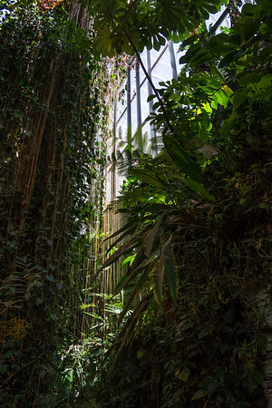 Biodome Tropical Forest