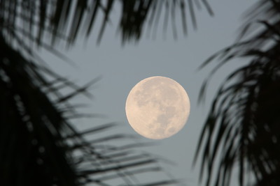 Day full moon between palm trees