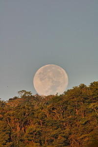 Daylight full moon over the forest in the horizon