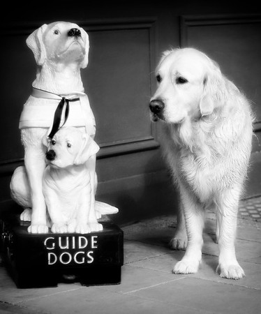 Guide dogs do amazing things