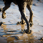 Mutts in the Mud
