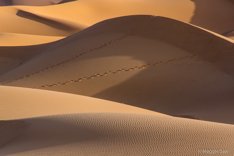 Track in the dunes.