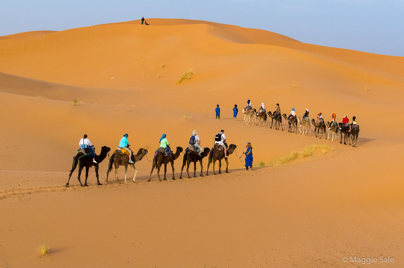 Half of our group on camels as sunset approached - catching up with those in front!