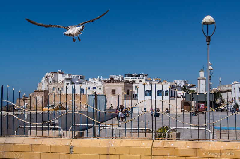 Looking toward old town of Essaouira from the port area.