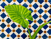 Tiles and plant in the courtyard of our riad hotel in Fez.