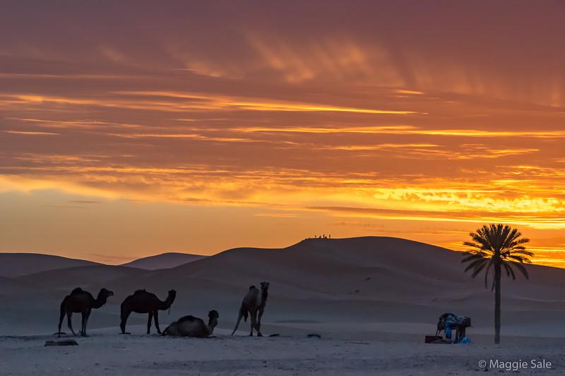 Sunrise outside our hotel at Murzuga in the Erg Chebbi desert dunes region.