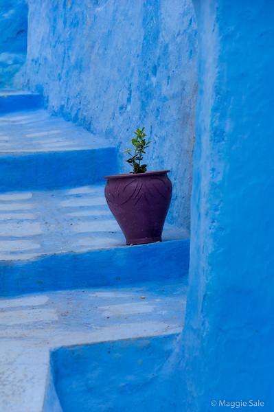 Pot on the steps.