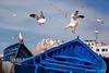 Seagulls of Essaouira