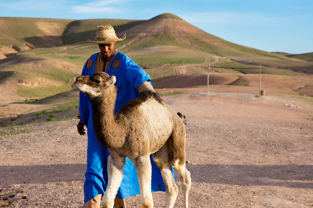This man loves his baby camel.  Who doesn't  love a baby camel?