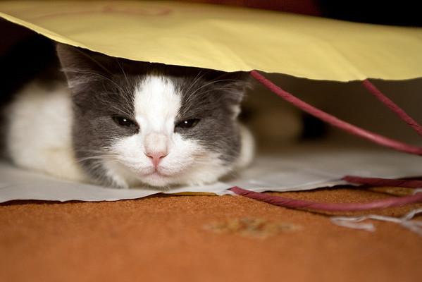 Moglet in a carrier-bag.
