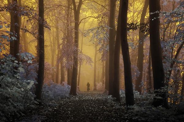 Entering wonderland