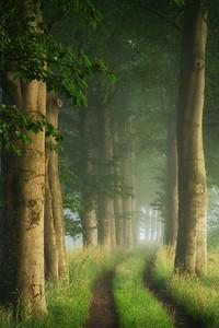Summer path